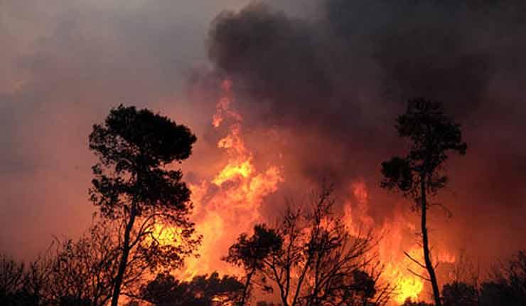 Todavía no sabemos qué incendios fueron intencionales