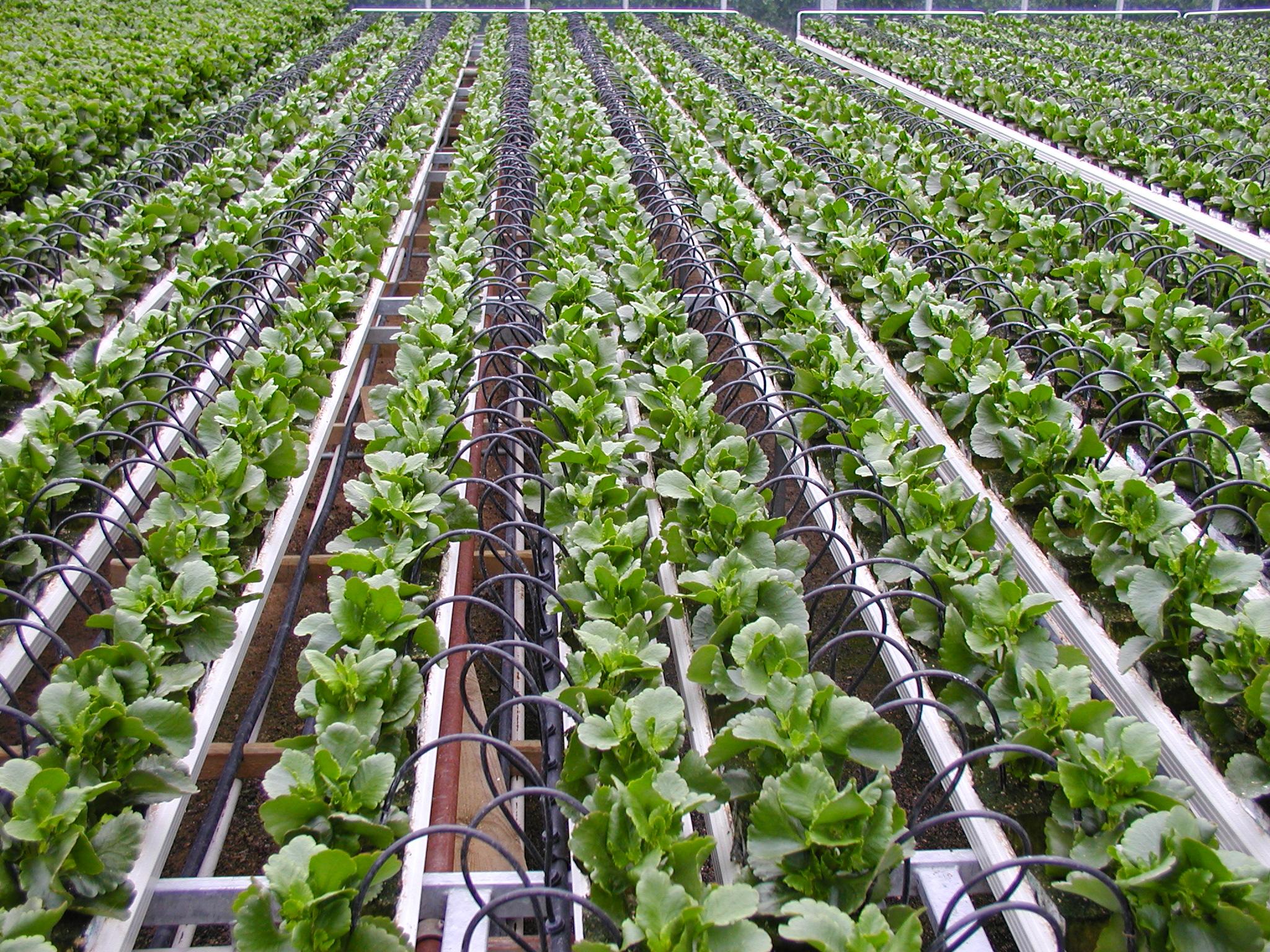 África incorpora el modelo agrario israelí del kibutz